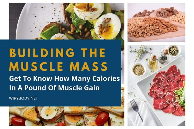 calories-in-a-pound-of-muscle-gain